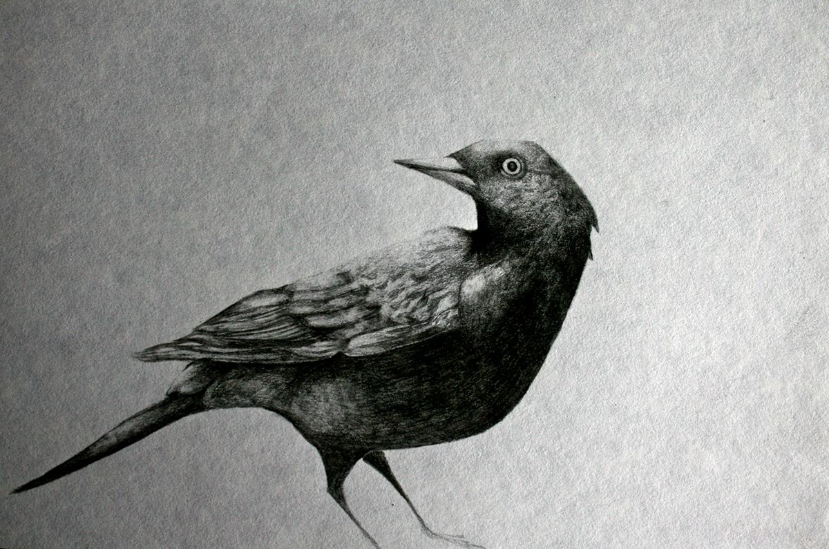 No era un simple pájaro negro - literatura