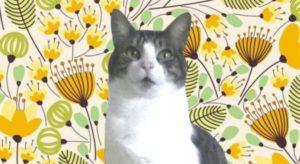 Soy Fellini, el gato positivo - el-cronicario