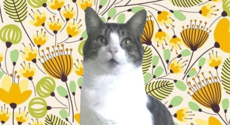 Soy Fellini, el gato positivo - El Cronicario